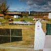 Construir Casa de Campo