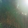 Redisseny i manteniment de petit jardí