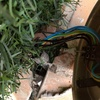 Colocación foco jardín previo reparado solado