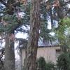 Pora y tala en san lorenzo de el escorial