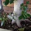 Retirar árboles de una jardinera
