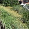Limpar Parcela de Hiervas con Desbrozadora