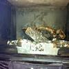 Limpieza de chimenea y revisión de instilación