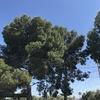 Talar dos pinos