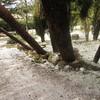 Talar 20 árboles en casa (entrada vivienda)