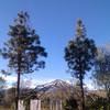 Cortar pinos