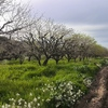Vallar un terreno agricola