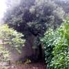Podar cuatro árboles