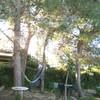 Podar 4 pinos adultos en chalet