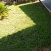 Poda y posterior mantenimiento de jardín