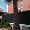 Cortar palmera de 6m