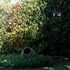 Mantenimiento y reparación plantas y setos photinias en casa
