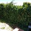 Limpieza vallas de jardín