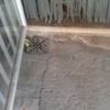 Solar patio 20 m2