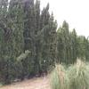 Podar árboles en altura