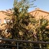 Podar y retirar ramas de un árbol de unos 8 0 10 metros de alto