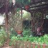 Arreglo jardín pequeño