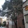 Poda árbol y posible retirada de valla pequeña