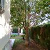 Cortar arboles en jardin de vivienda unifamiliar