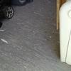 Reparación suelo caseta de obras