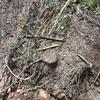 Arrancar raices/troncos
