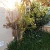 Trabajo de jardinería jardín 20 m cuadrados
