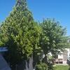 Podar árboles jardin