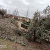 Retirar ramas rotas en setos por nevada