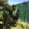Muro perimetral parcela