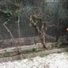 Muro contención jardín