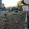 Diseñar mi jardín