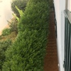 Podar 12 arbustos en hendaya