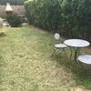 Quitar seto cipreses/tuyas de jardin