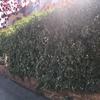Mantenimiento jardín de un bajo