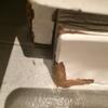 Cucarachas en vivienda inicialmente sólo vistas en el baño