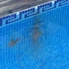 Reparación fuga piscina