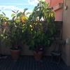 Adecuacion plantas en terraza sobreatico en barcelona