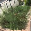 Desbrozar y arreglar un jardín