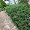 Poda jardin