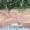Retirar árbol de jardín de 5 metros de longitud y sustituir valla metálica de 6 metros lineales por 2m de alto
