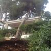 Retirar un pino