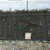 Puerta metálica para jardín con instalación