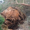 Solucionar avería eléctrica por árbol caído