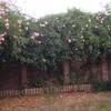 Adecentamiento jardin unifamiliar