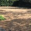 Arreglar instalación de riego con aspersores maxi paw rain bird