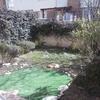 Instalar sistemas de riego, poner césped y arreglar un jardin pequeño