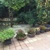 Reforma de jardin delantero e integración con porche