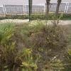 Limpieza y desbroce de jardin