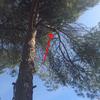 Cortar una rama