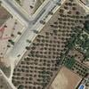 Retirada de 191 olivos en mairena de aljarafe